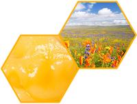 Мёд из лугового разнотравья